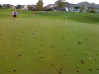 Golf Course Damage 2